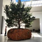 Céleste Boursier-Mougenot, Venice Biennale 2015