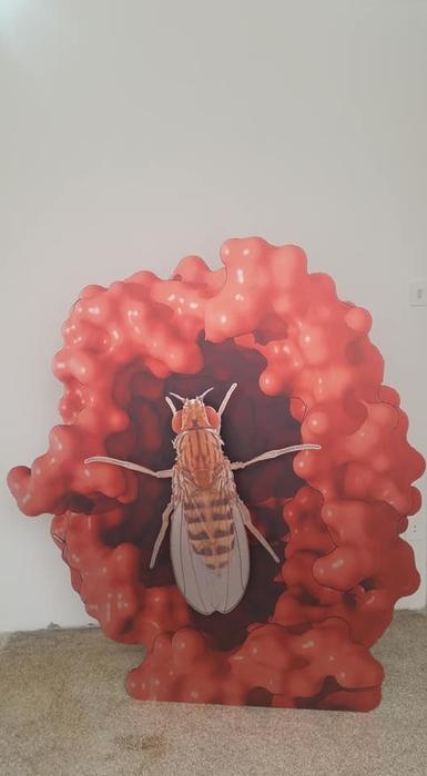 Katja Novitskova, Estonian Pavilion, 57th Venice Biennale