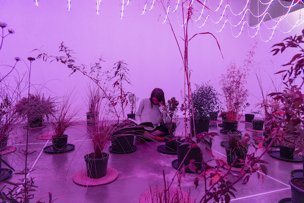 Zheng Bo, After Science Garden, Site-specific installation (plant, led lights), variable dimensions, 2018. Courtesy the artist.